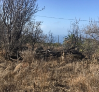 Terreno edificable (incl. licencia) 1992 La Palma