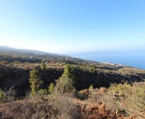 Terreno edificable (incl. licencia) 1951 La Palma