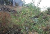 Landhaus 1276 La Palma - 9