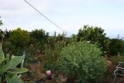 Загородный дом 2422 La Palma - 39