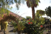 Casa 3437 La Palma - 31