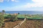 Landhaus 3450 La Palma - 30
