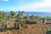 Landhaus 3450 La Palma - 31
