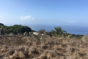 Property incl. new housing 725 La Palma - 6