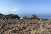 Property incl. new housing 725 La Palma - 5
